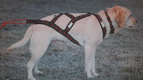 An example of perfectly fitted harness